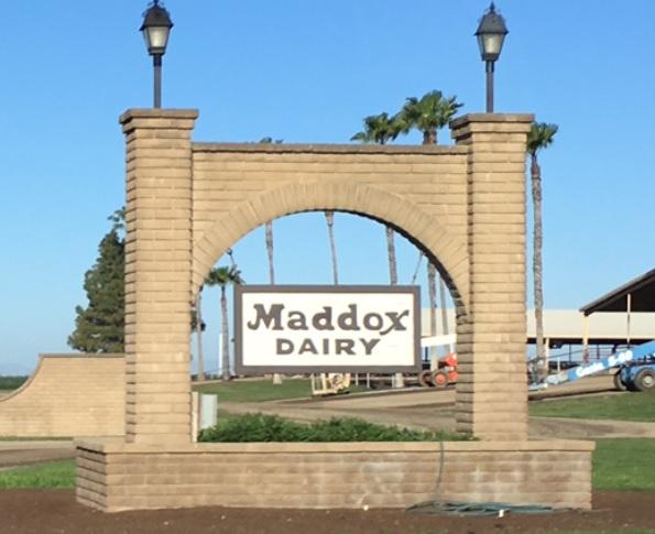 maddox dairy